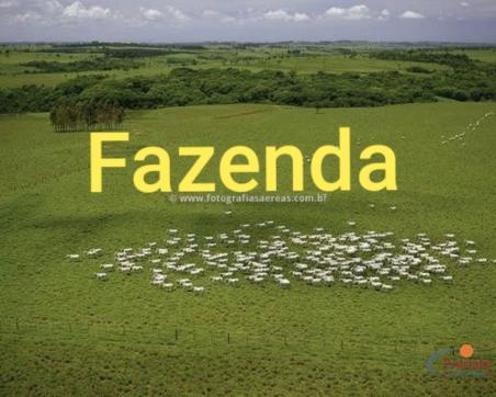 Fazenda 206 Alqueires entre Carapó.... José Pedro da Silva